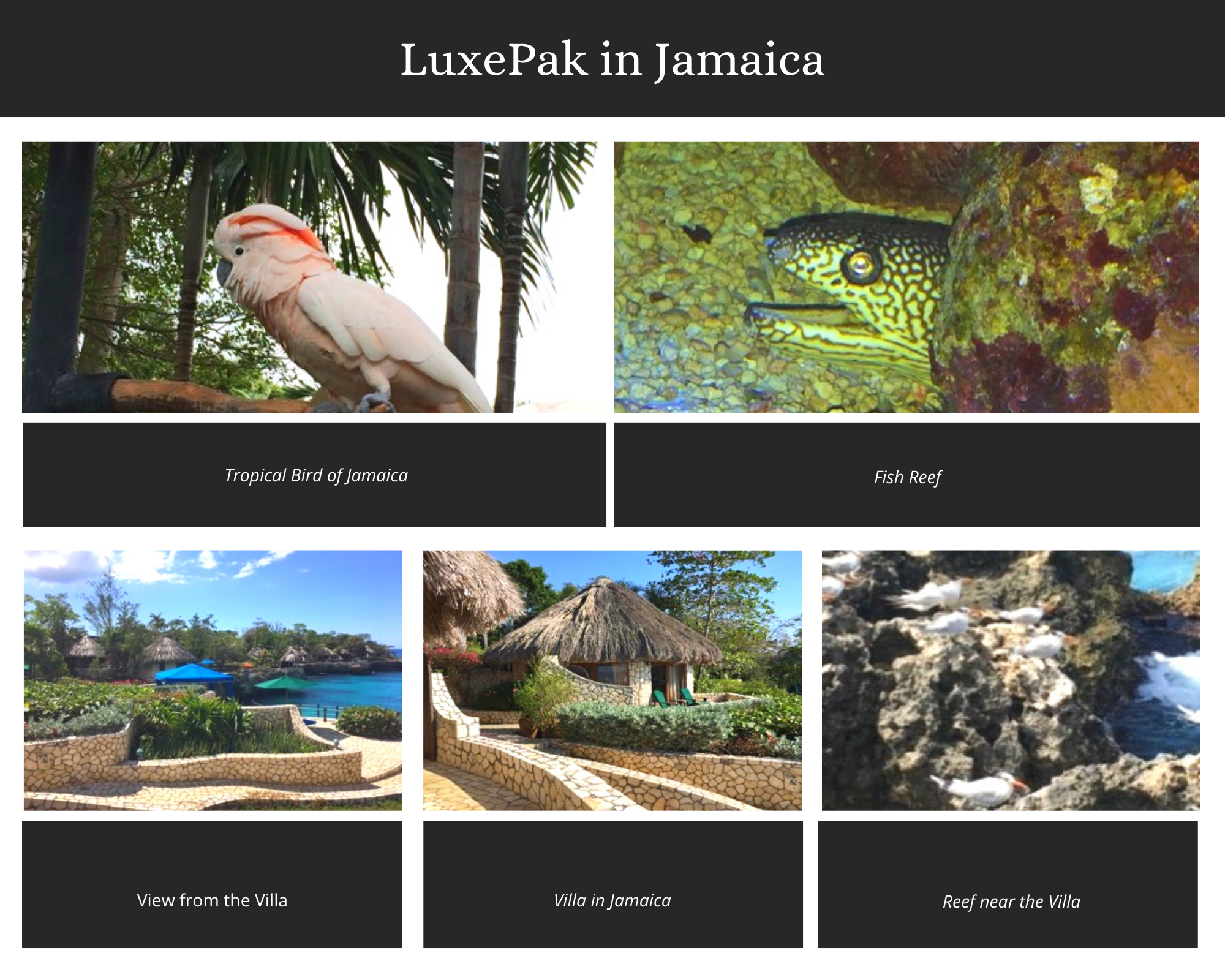 LuxePak Travels to Jamaica